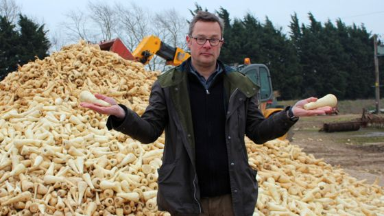 hugh-pile-of-parsnips