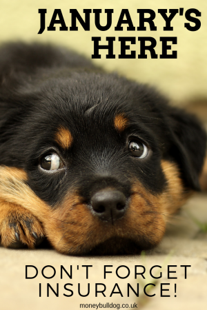 Cute Puppy - Don't forget insurance!